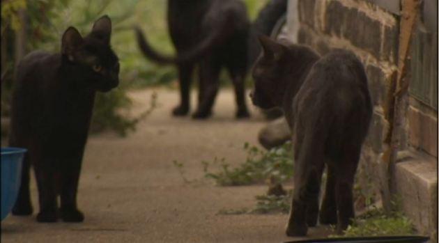 Crisis por colonia de gatos en casa abandonada