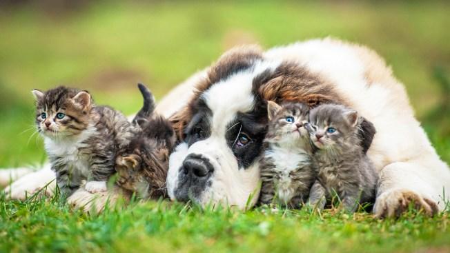 5 razones por las que hoy es mucho más fácil tener mascotas