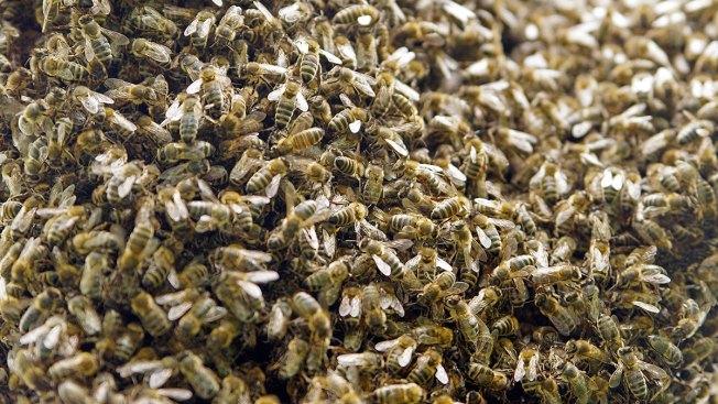 Escapan millones de abejas tras volcarse camión