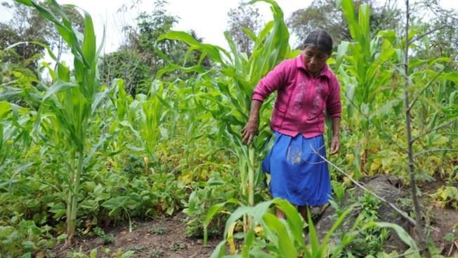 La pobreza acecha a las mujeres en zonas rurales