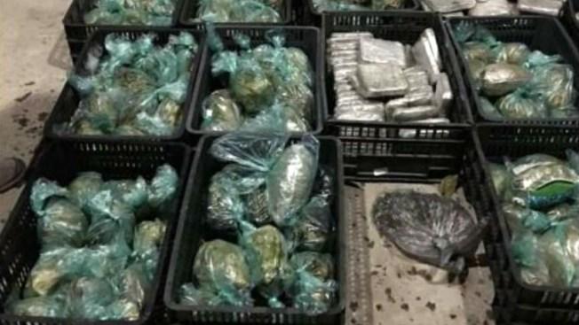 Ocultan 100 kilos de marihuana en aguacates