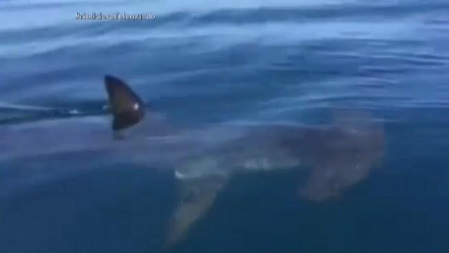 Captado en cámara: encuentro con pez martillo