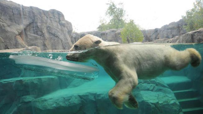 Entrada gratis al Brookfield Zoo