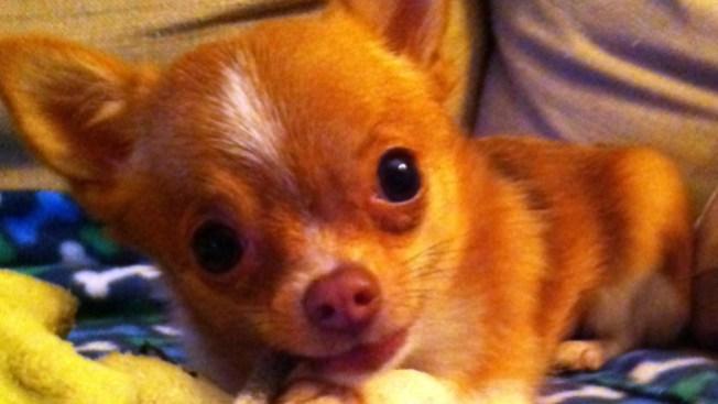 Sitios de información nutricional para mascotas