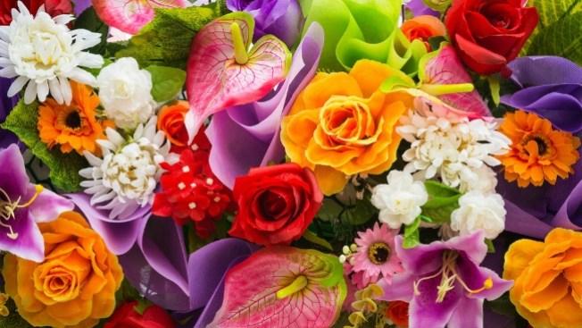 Que Flores Son Las De Tu Signo Zodiacal Telemundo Chicago