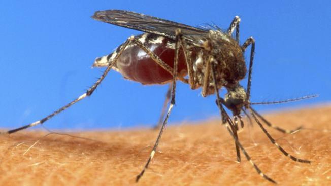 Brote de virus podría empeorar