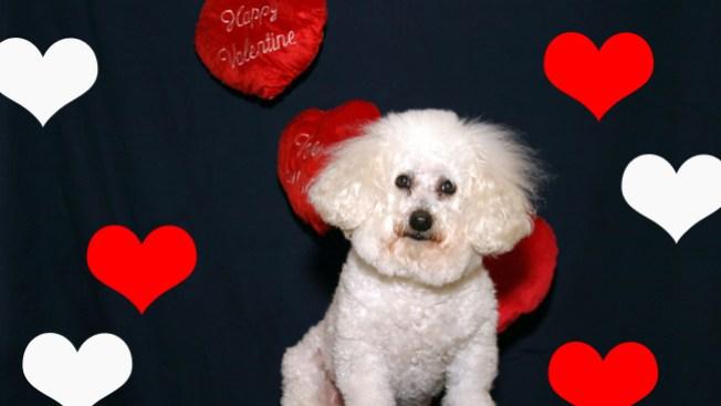 Envía tu foto de San Valentín<!-- Chicago -->