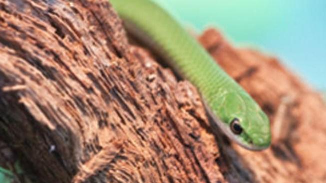 Zoológico libera serpientes
