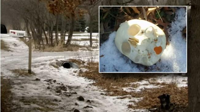 Un niño encontró el primero de los cráneos
