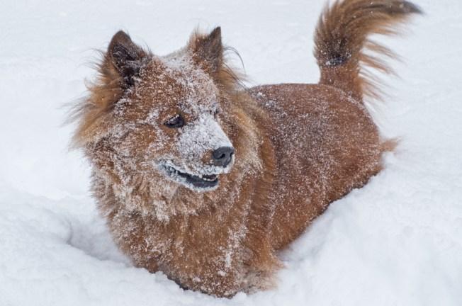 Multas en IL por dejar mascotas al aire libre
