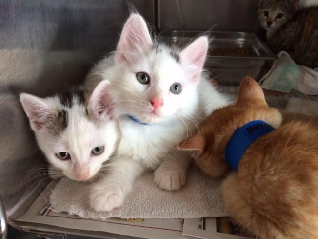 Rescatan gatos abandonados bajo el sol
