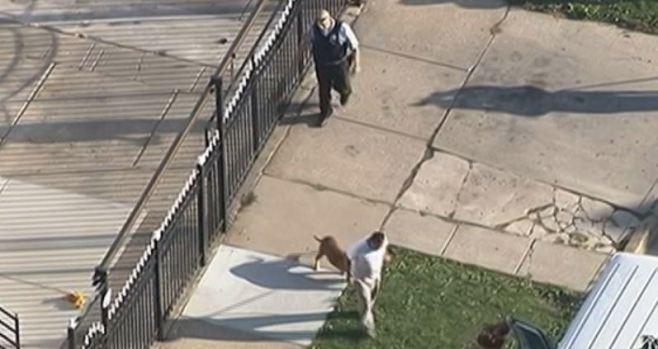 Pitbull ataca abuela y nieta en Gage Park