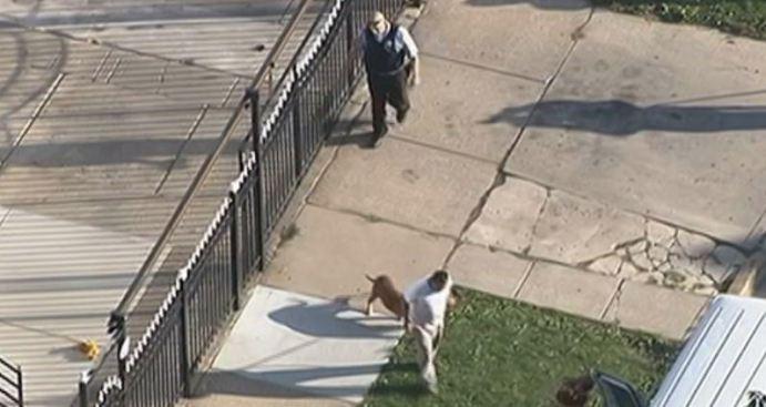 Pitbull ataca a una abuela y a su nieta en Gage Park